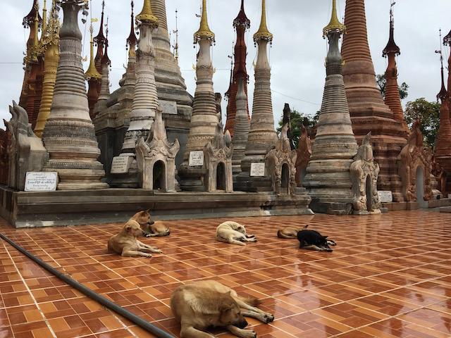 インディン遺跡で寝転ぶ犬