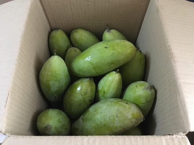 ミャンマーのマンゴー